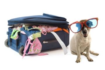 perro-viajero
