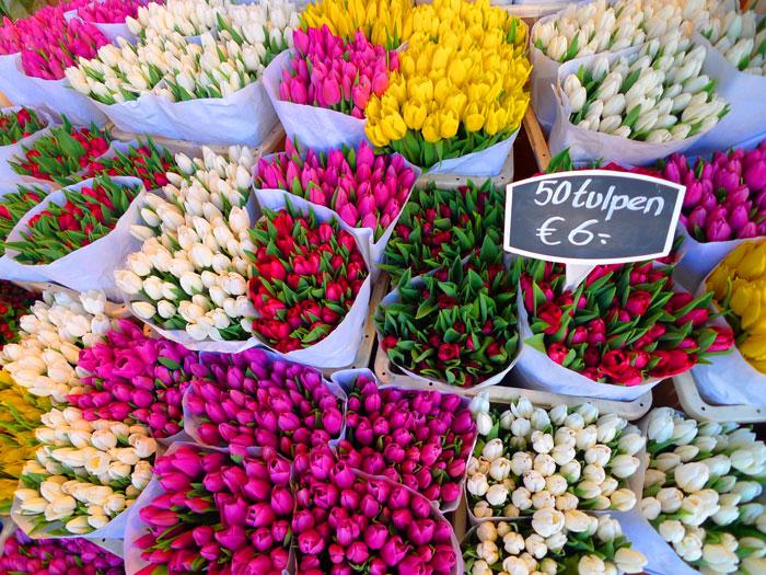 tulipanes-flowermarket