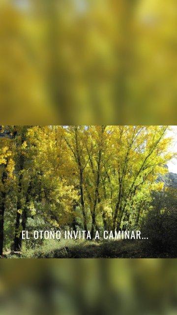 El otoño invita a caminar...
